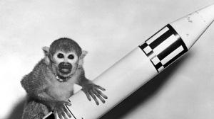 monos-radioactivos01