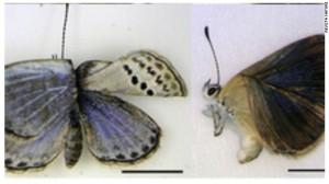 120814062941-mariposas-story-top