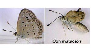 mariposas-fukushima