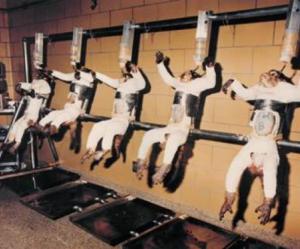 animal experiments 580x482 - Militares británicos infectan con el virus del Ébola a 250 ratones y monos
